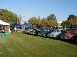 Collection of beautifully restored split and oval window Volkswagen bugs at a car show