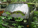 Forgotten VW junkyard With Early Volkswagen Vanagon Bus Growing Ferns and Weeds
