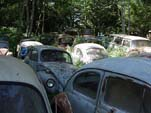 Secret Volkswagen junk Yard With Large Collection of VW Beetles Hidden in the Trees