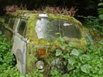 VW Auto Wrecking Lot has a Very Mossy Volkswagen Bay Window Bus