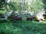 Forgotten VW Salvage yard With VW Bugs, Squareback Wagons and Vanagon Buses